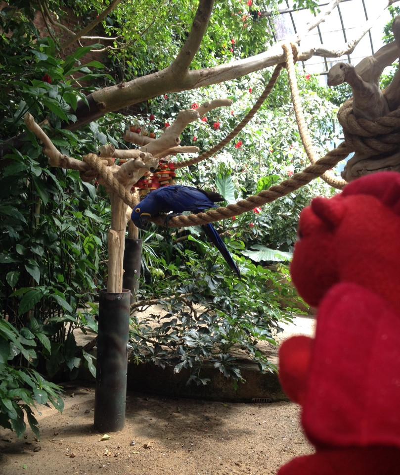 Dafydd regards the Aviary's Hyacinth Macaw.