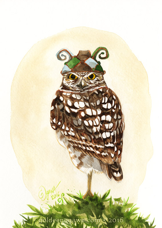 Burrowing Owl in a Pine Jester.