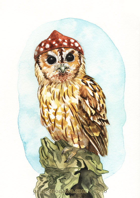Tawny Owl in a Red Atagaric
